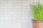Mosaik Fliese Keramik Stäbchen Steinoptik weiß Fliesenspiegel Küche MOS24-STSO01_m