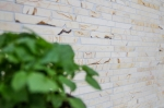 Mosaik Fliese Marmor Naturstein Brick golden cream poliert Struktur MOS40B-2807_m