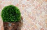 Mosaik Fliese Marmor Naturstein rot Bruch Ciot Rossoverona MOS44-30-140_m